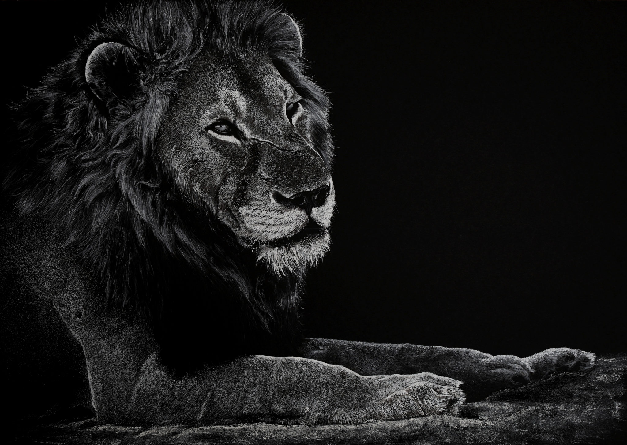 """Not a king, a lion"""