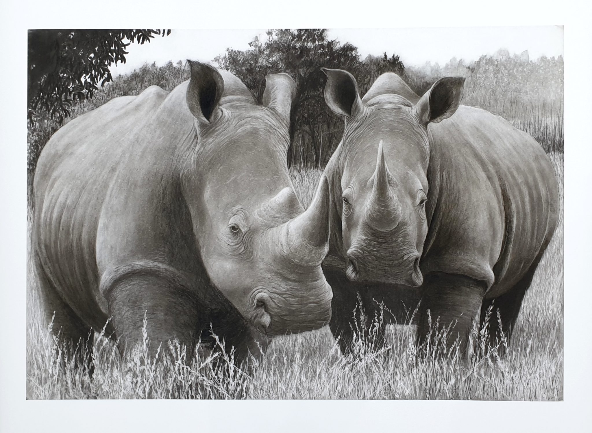 """Brace of rhinos"" Limited edition pencil sketch"