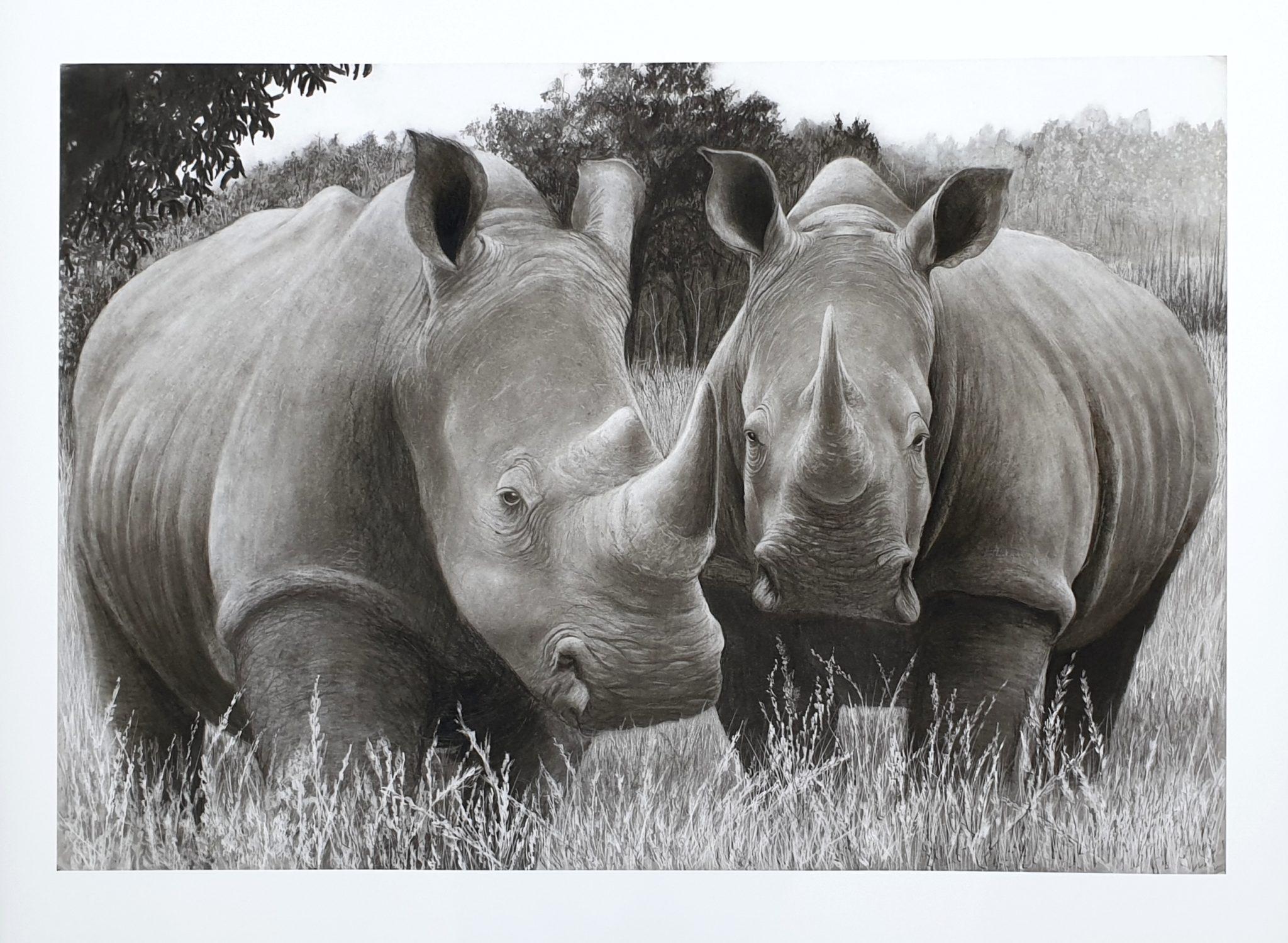 """Brace of rhinos"" Limited edition pencil sketch"
