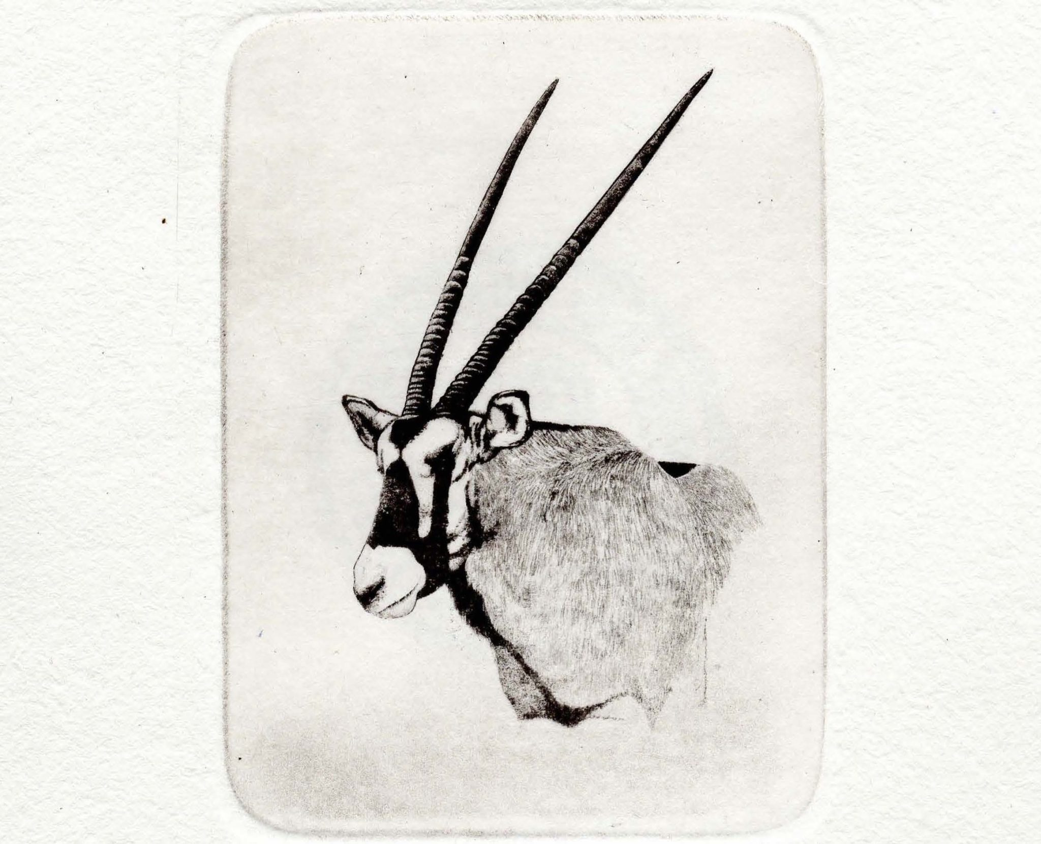 Oryx stamp limited edition print