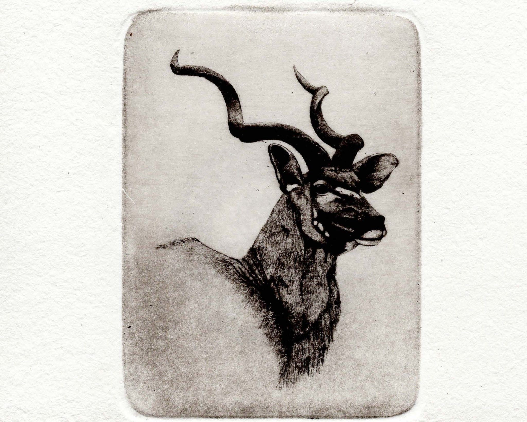 Kudu stamp limited edition print
