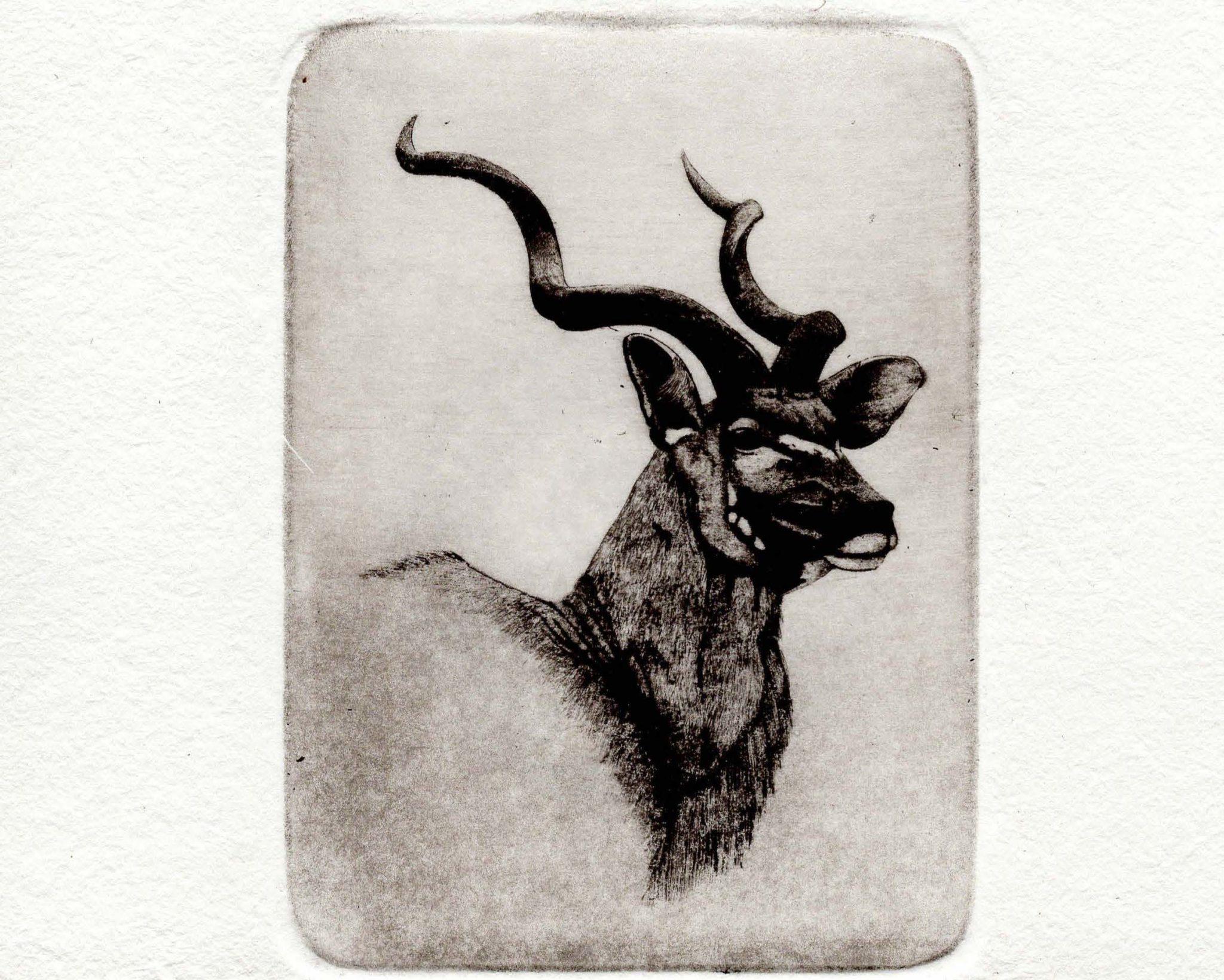 Kudu stamp limited edition print