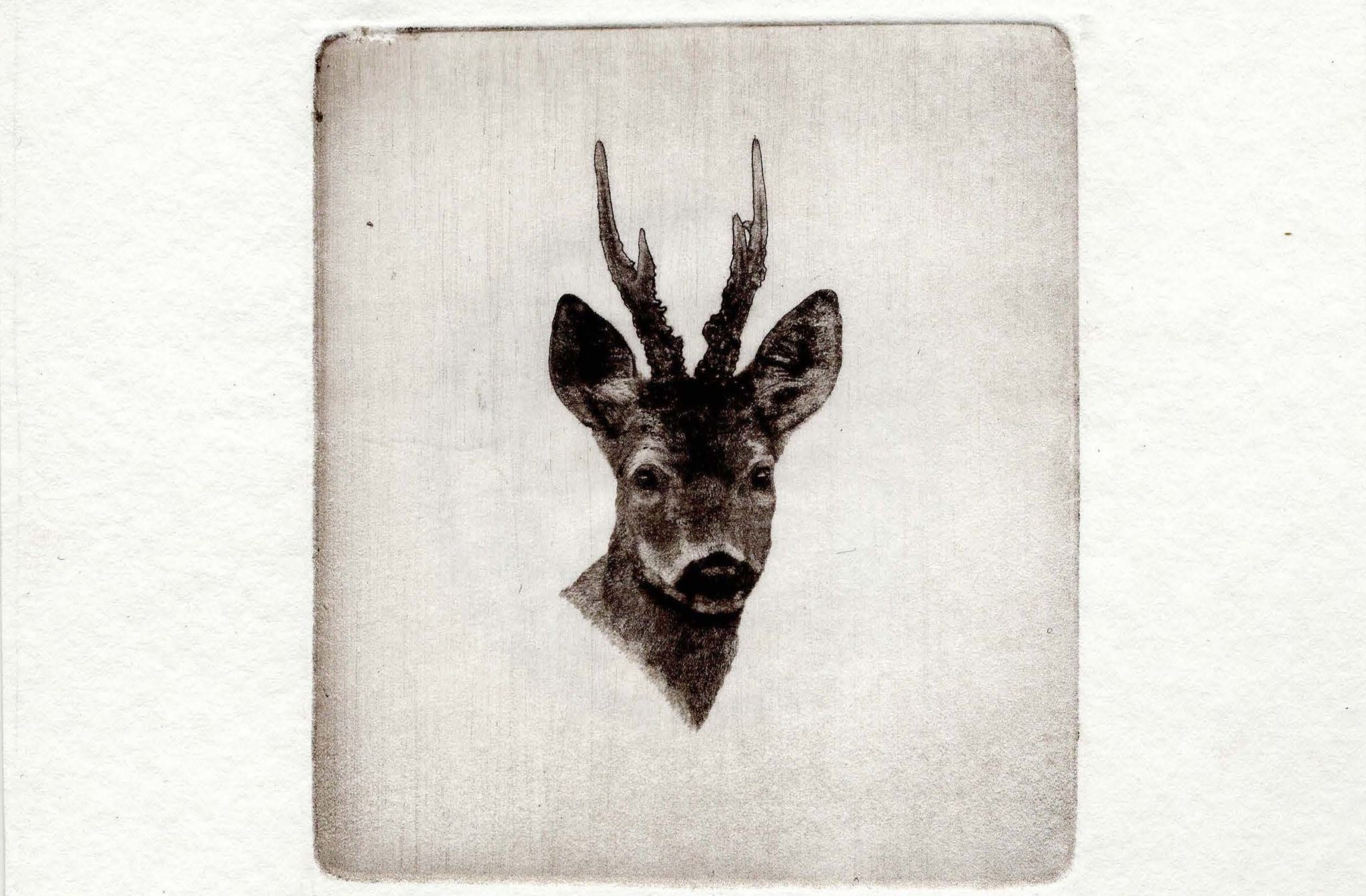 Roebuck stamp limited edition print